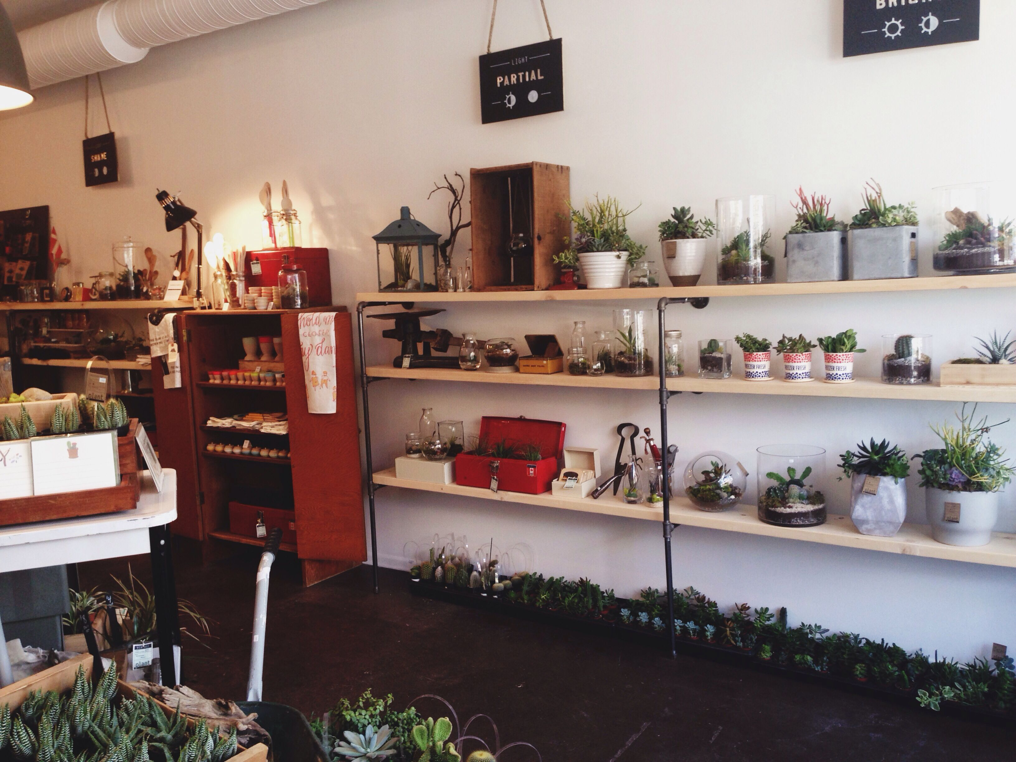 PLANT terrariums shop in Inglewood, Calgary photo by