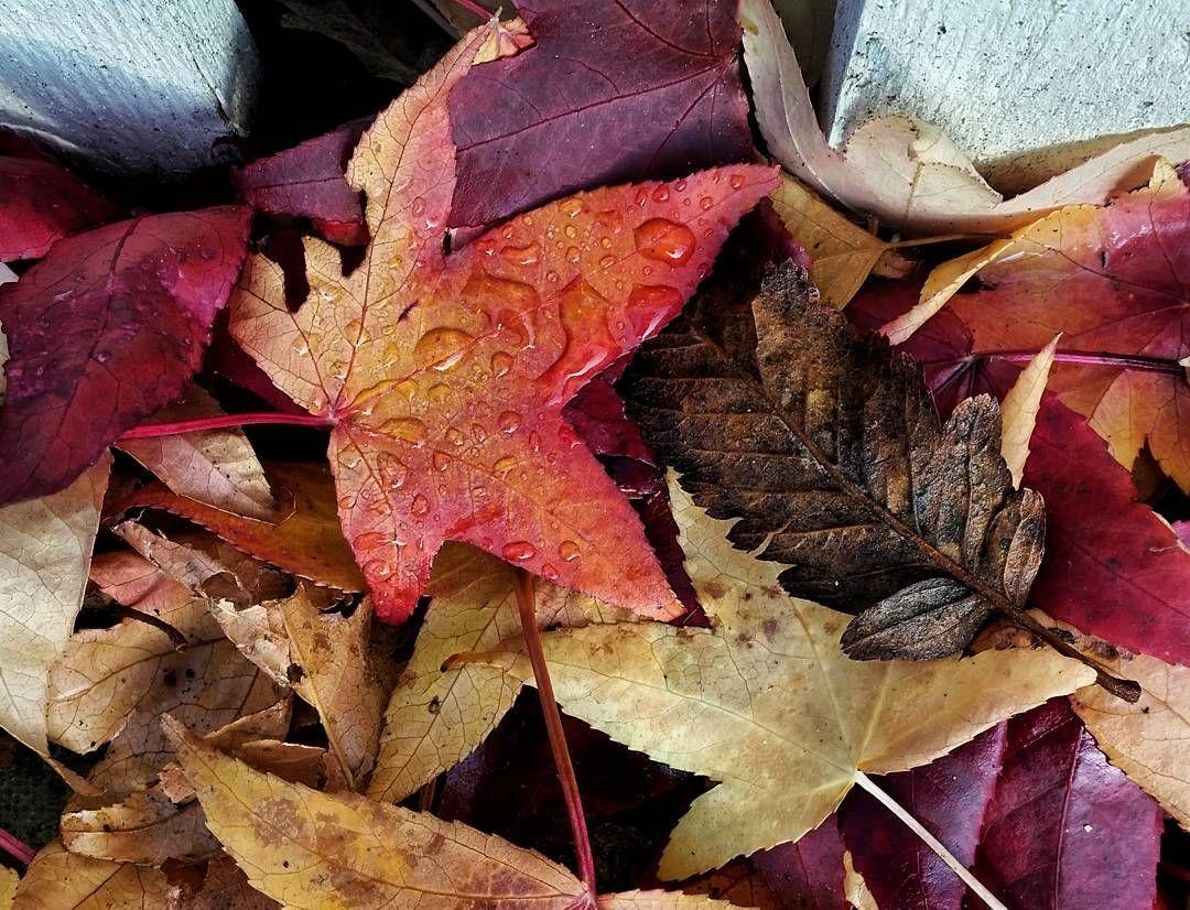 The fallen leaves in Kew.