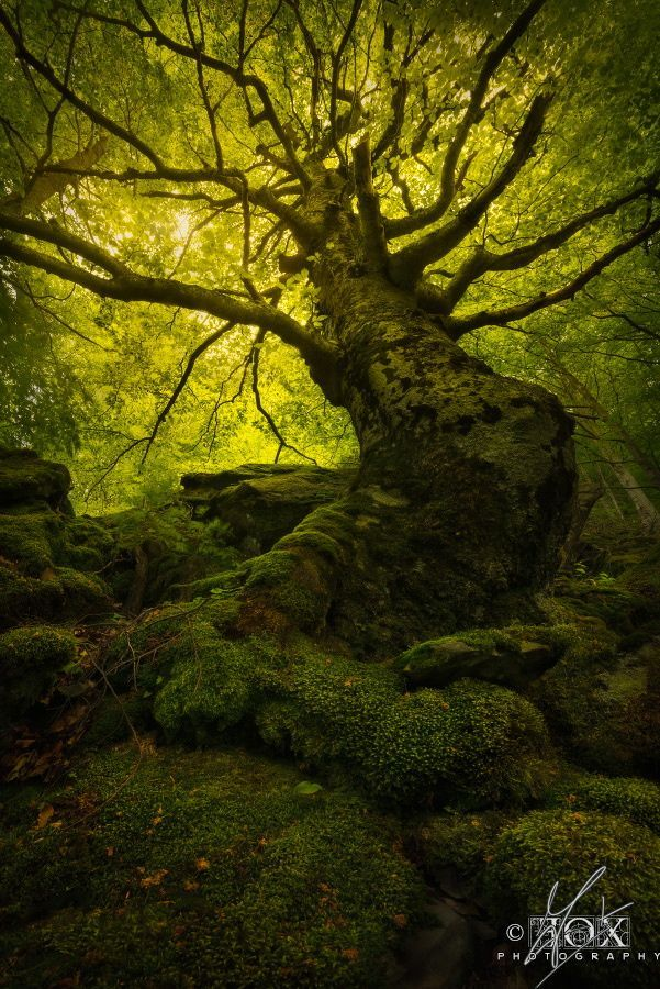 """cuiledhwenofthegreenforest: """"King of the Forest by Enrico Fossati """""""
