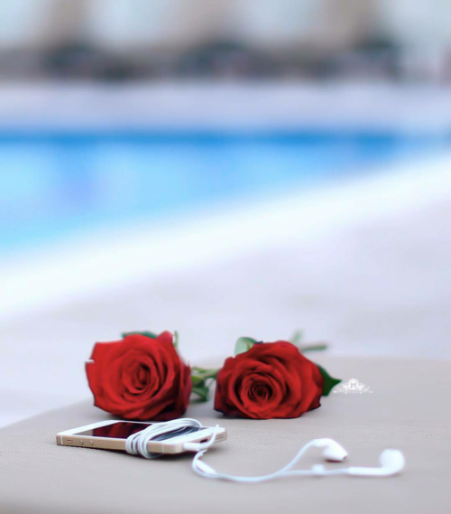 Pin On Roses For Your 2