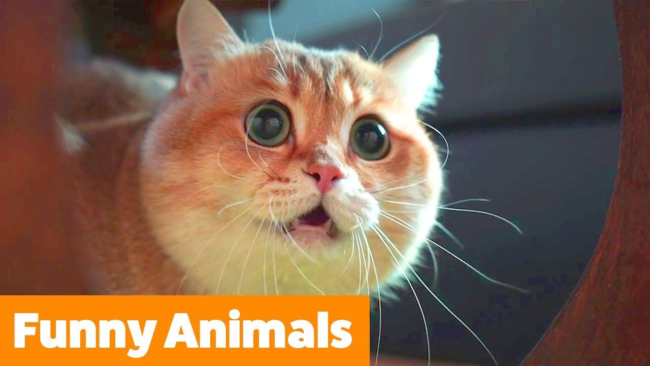 Cute Funny Animals Funny Pet Videos Youtube In 2020