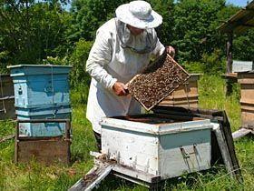 Comment installer une ruche dans son jardin abeilles pinterest permaculture agriculture - Avoir une ruche dans son jardin ...