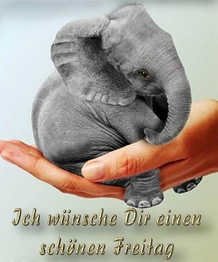 Pin Von Hopesjourney Auf Elephants Baby Elefant Indischer