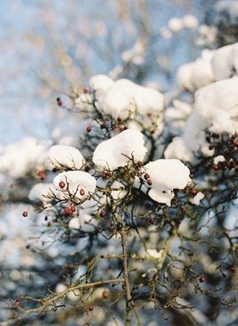 La #neige en #hiver