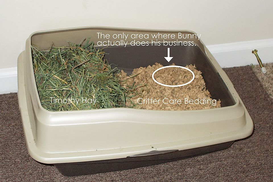 Can You Use Cat Litter For Rabbit Bedding