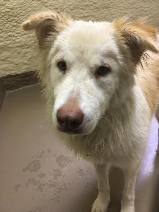 Panama City Fl Meet Mundoo Male 1 Yr Old Siberian Husky