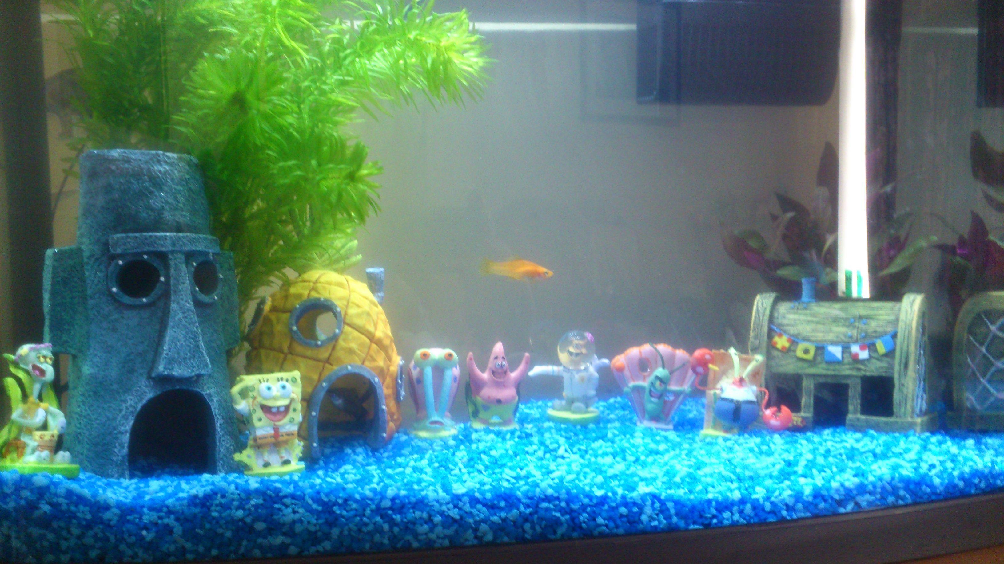 Freshwater fish kauai - Our Sponge Bob Squarepants Fish Tank Theme