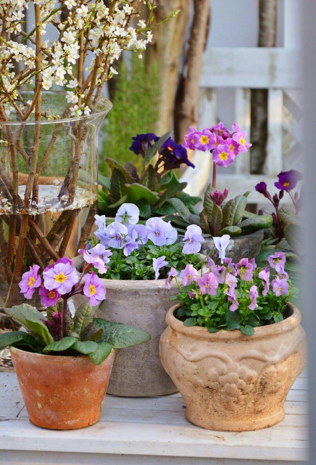Pin by lisa mansfield on gardening pinterest rabbit and gardens gardens potted gardenpurple flowersspring mightylinksfo