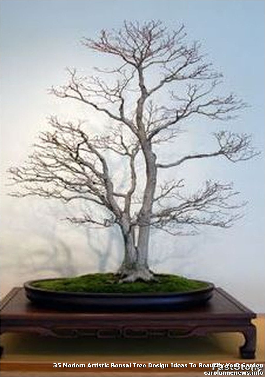 35 Modern Artistic Bonsai Tree Design Ideas To