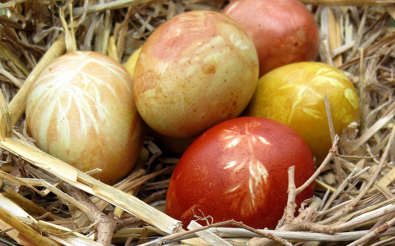 Ohne ungesunde Farbstoffe: Ostereier mit Naturmaterial färben ...