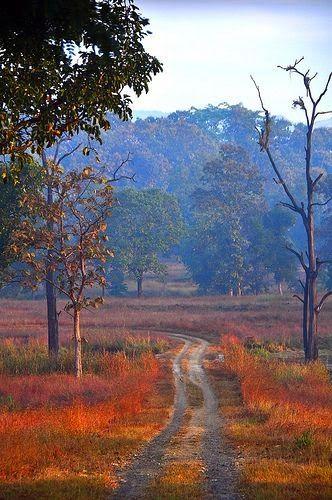Satpura National Park, India-10 Worlds Amazing Forests