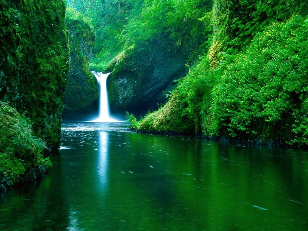 Wallpaper Download 1024x768 Magic Waterfall In The Green Nature Forests Imagenes De Paisajes Hermosos Fondo De Pantalla De Cascada Paisajes Hermosos Naturales