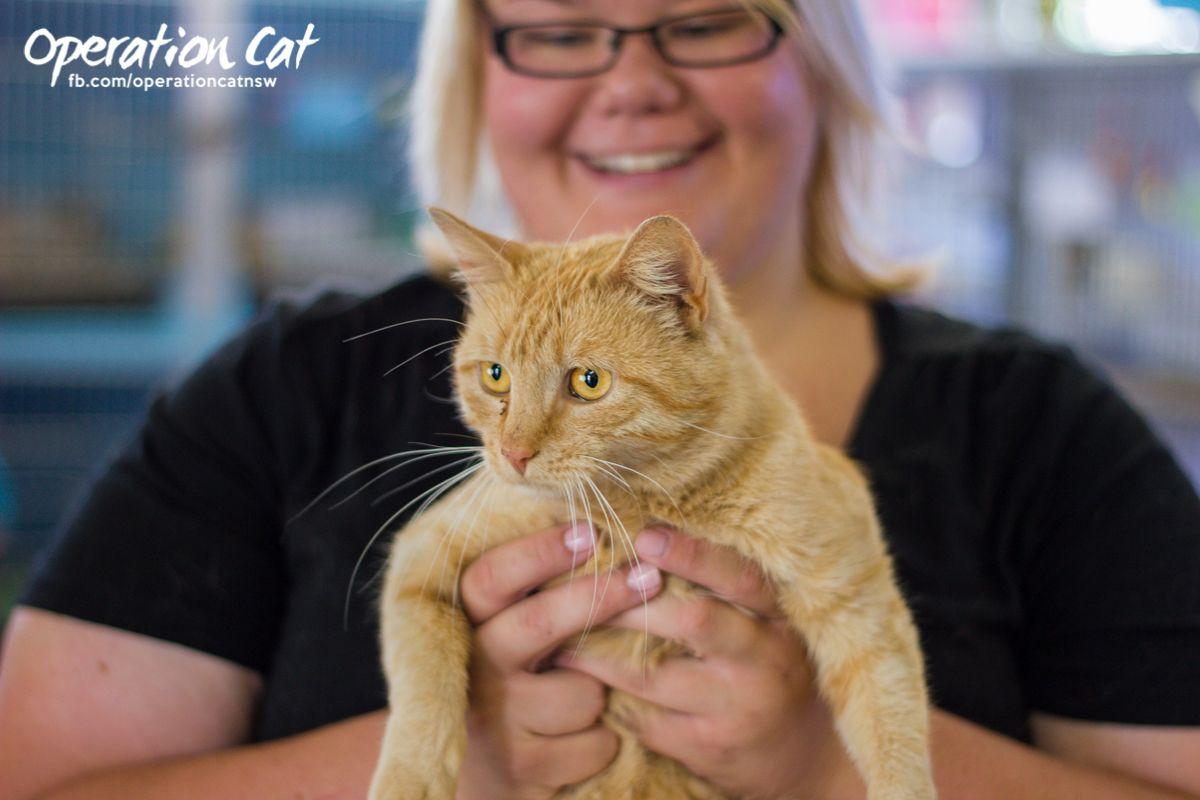 Cat Adoptions Renbury Farm Cat Adoption Cats Dog Adoption