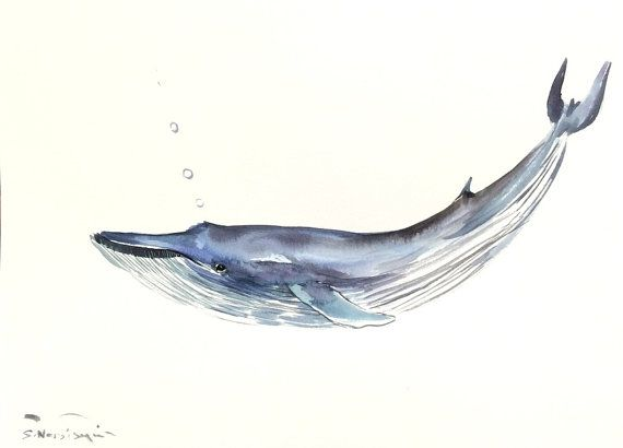 Blue Whale , 15 X 11 in, original watercolor painting, whale art ...