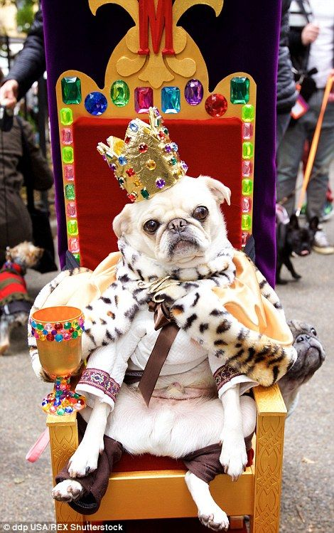 Hundreds Of Dogs Dress Up For 25th Halloween Parade In New York