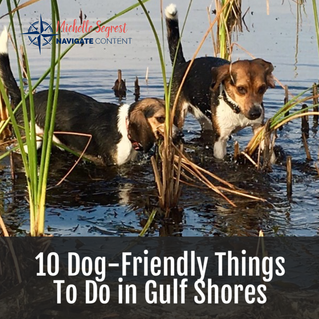 Top 10 Dog Friendly Things To Do In Gulf Shores Alabama In 2020 Dog Friends Dog Friendly Beach Gulf Shores