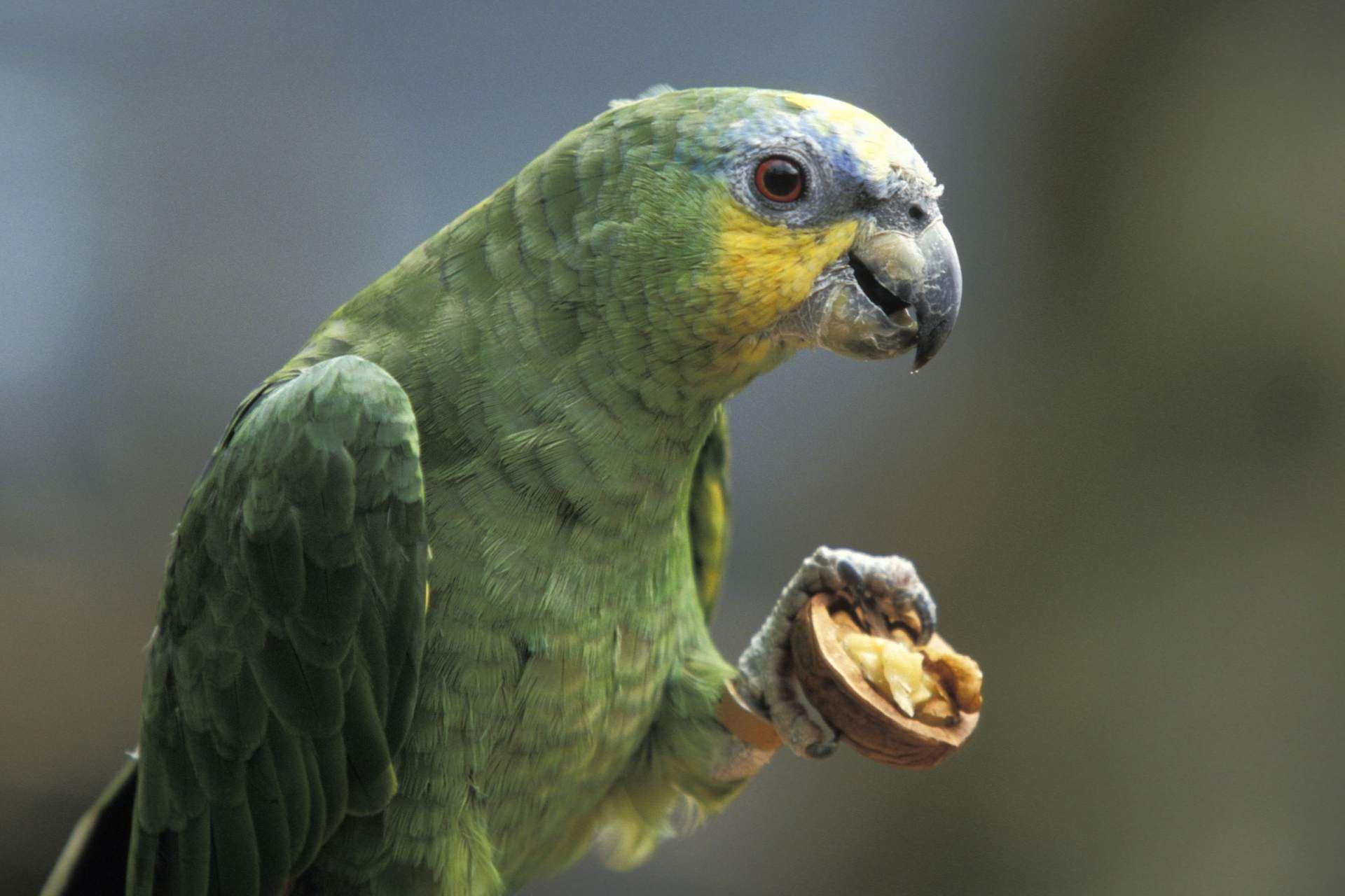 5 Types Of Pet Birds That Talk Parrot Types Of Pet Birds Pet Birds