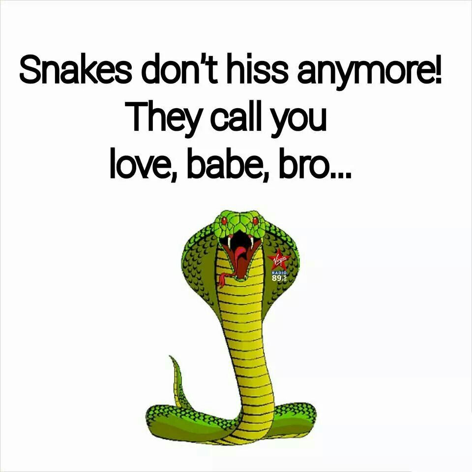 Snake Traitor Friend Fake Friends Quotes Fake Friends Lies Quotes