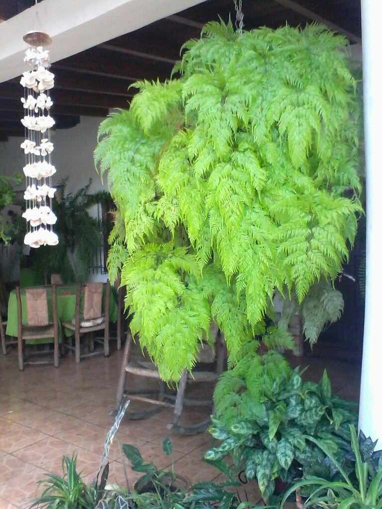 jardin vertical casero jardines verticales caseros aprende a dise arlos y mantenerlos precioso 1 Se conoce en Venezuela como rabo de mono