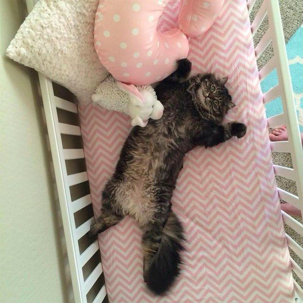 A Couple Built Their Baby A Cot And Now Their Cat's Decided It Was For Him