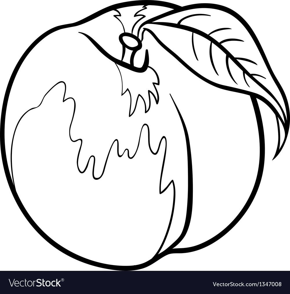 Peach For Coloring Book Vector Image On Coloring Books Black