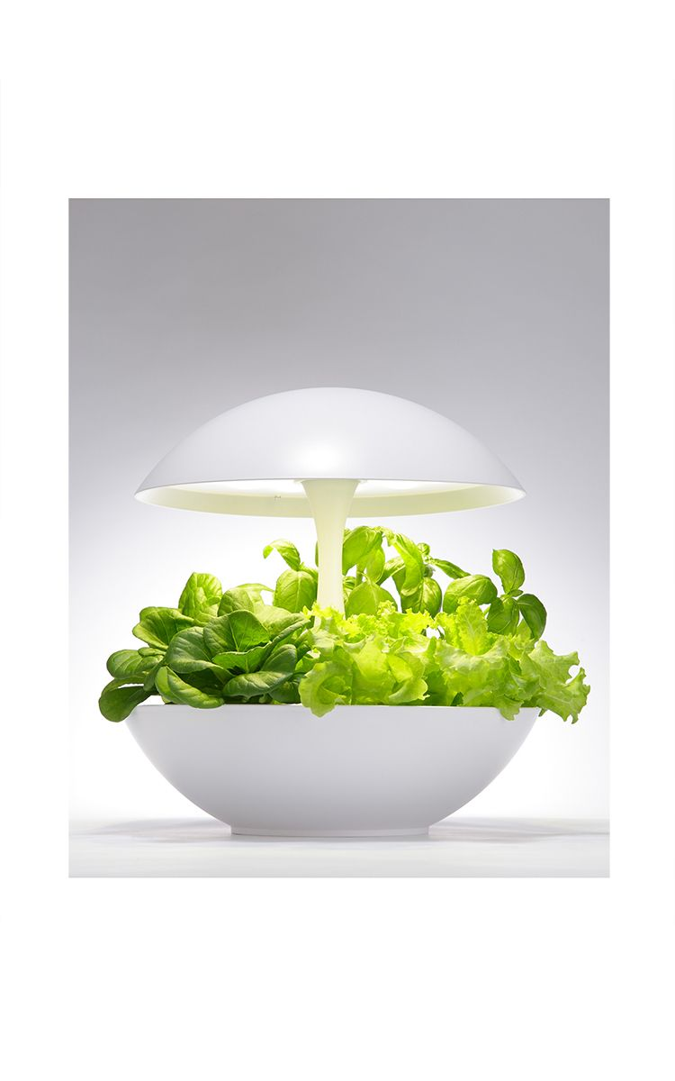 Hydroponic Plant & Flower Growlight by AKARINA Now Available on Moda ...