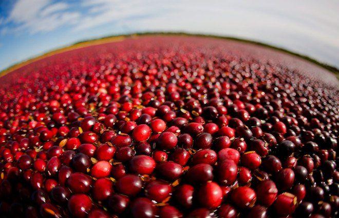 Ingredient of the week: Cranberries | canada.com