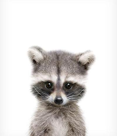 Baby Raccoon Printable Art - #Art #Baby #nursery #Printable #Raccoon #animalesbebébonitos