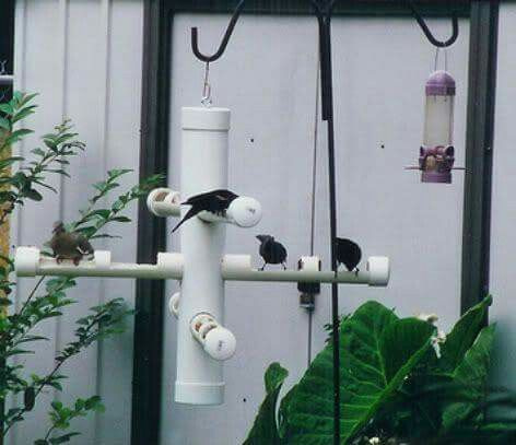 Nice PVC Pipe Bird Feeder
