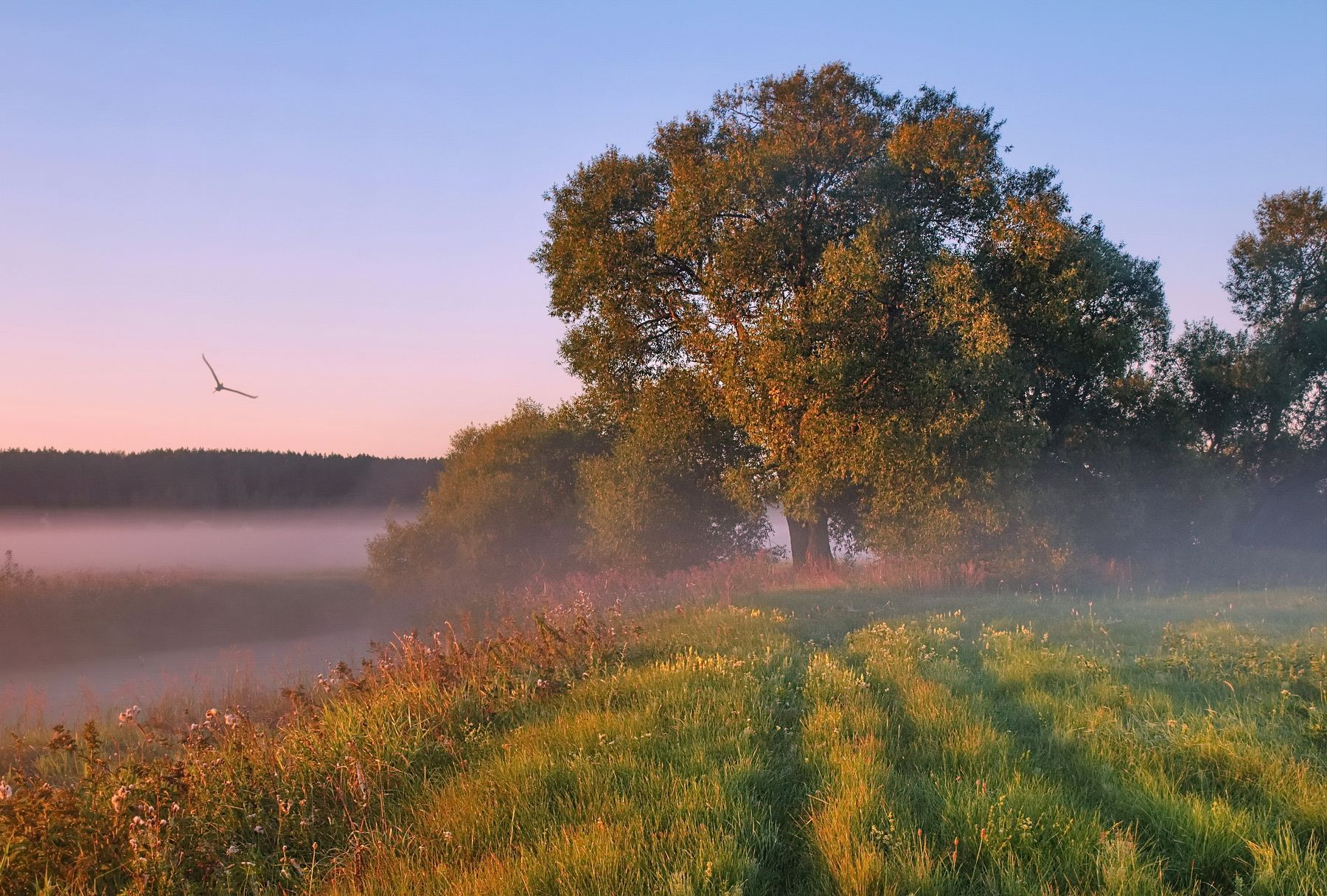 Летом на рассвете #утро #туман #солнце#утро #туман #солнце ...
