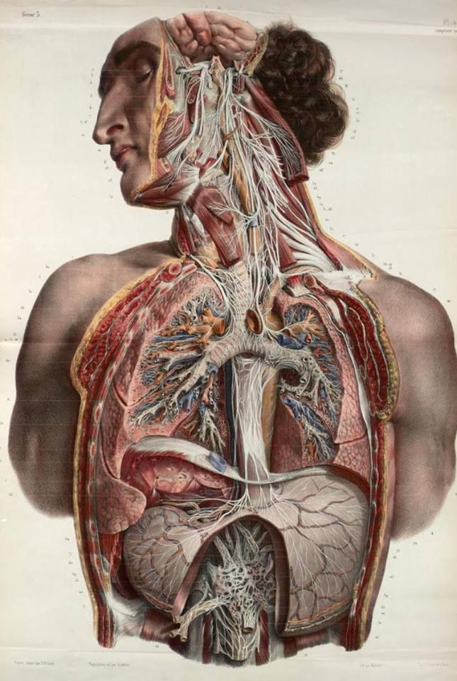 scienceyoucanlove: The autonomic nerves of the face, neck, thorax ...