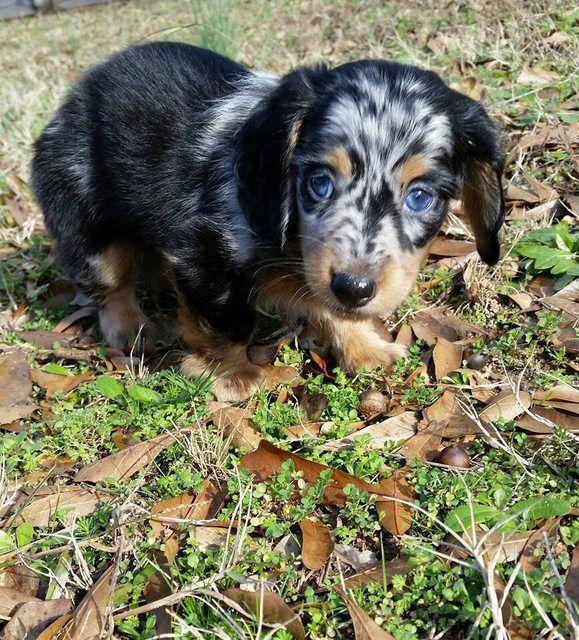 My new puppy, Leo