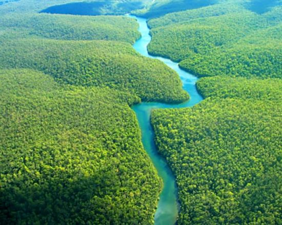 Amazon Jungle Is A Moist Broadleaf Forest That Covers Most Of The