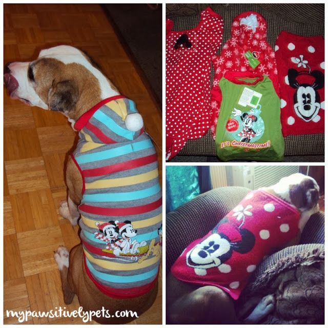Winter Fun From Petsmart Dog Clothes Your Pet Pets