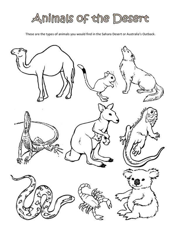 Life Sciences Ciencias De La Vida Ciencias De La Vida Animales Del Desierto Animales