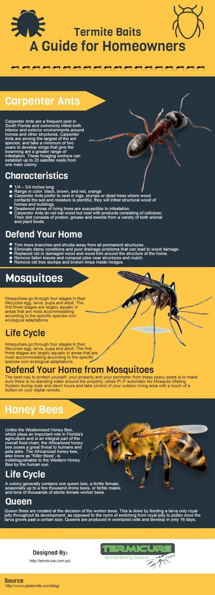 Termite Baits Termite Bait Termites Honey Bee Life Cycle