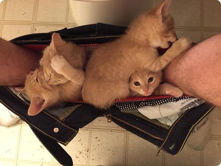 chatons roux dans le caleçon