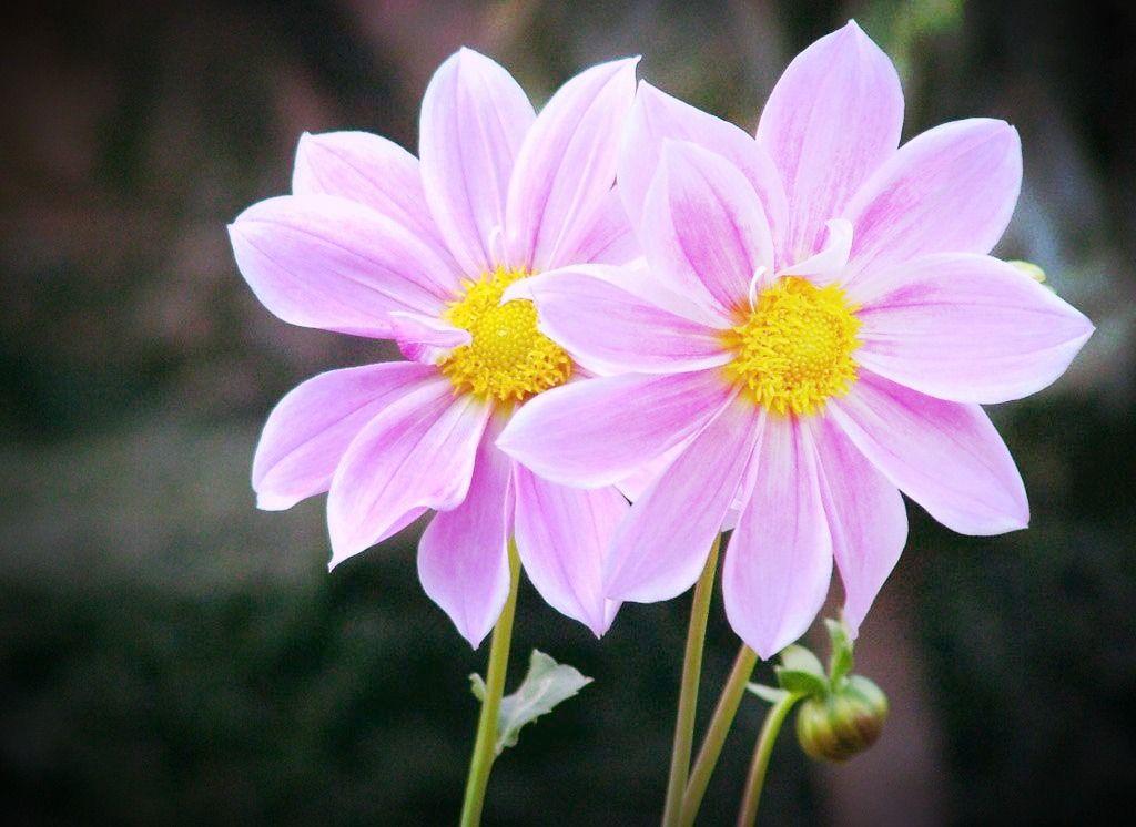 Minha primeira foto de flores ( No centro de Macaé ) Não sei o nome da flor , não ando sem minha câmera e quando vi essa flor já liguei minha…