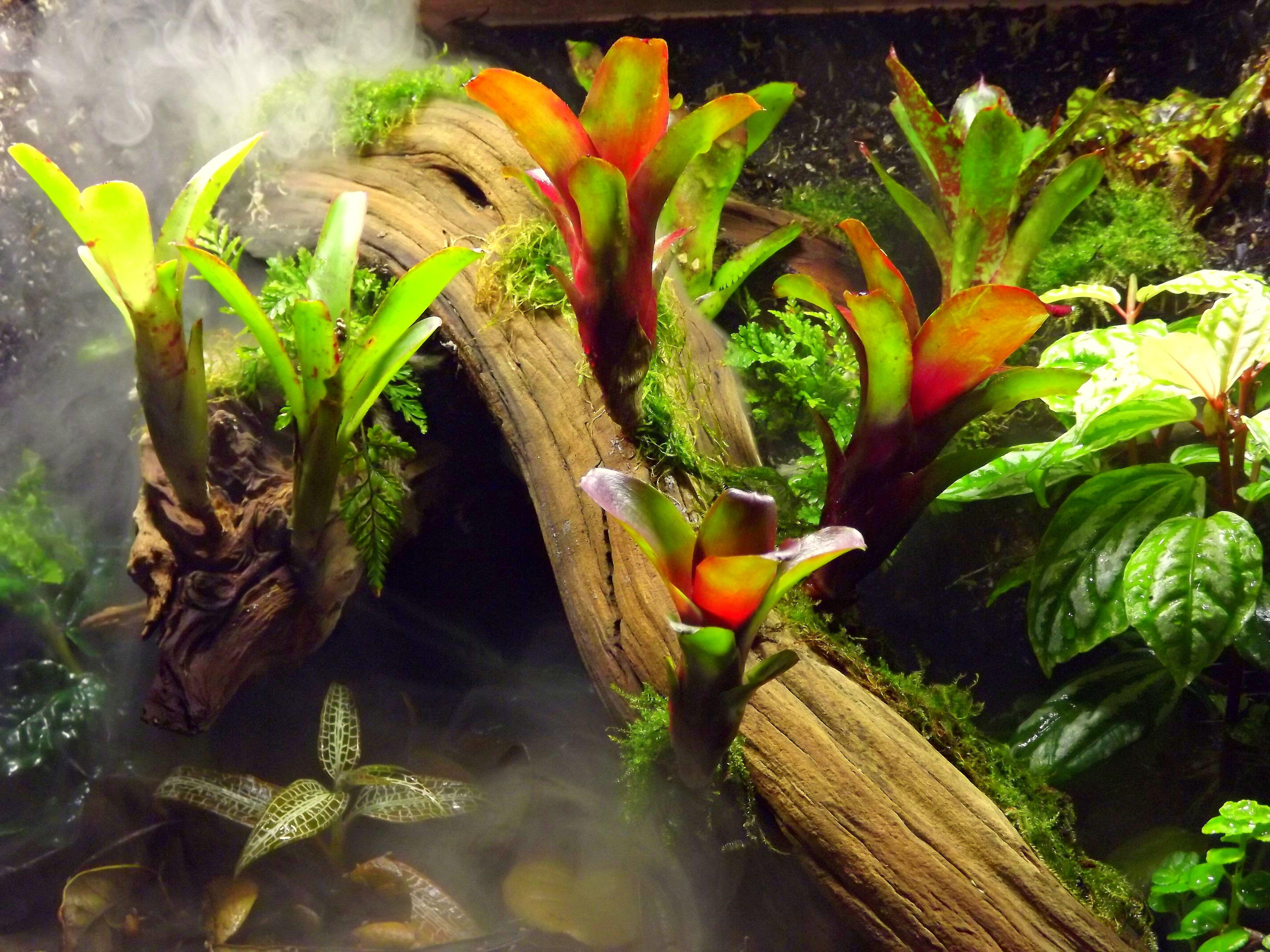 Creating a terrarium fogger reptile terrarium tree frog