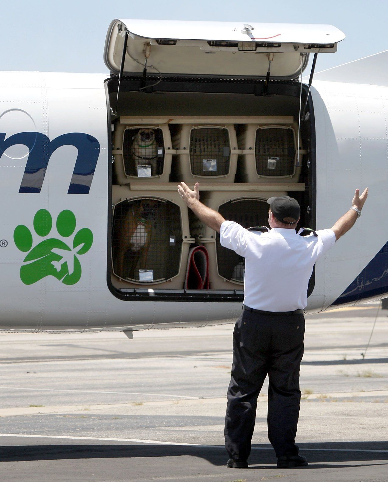 How Much is an Airline Ticket for Dogs? Dogs on planes