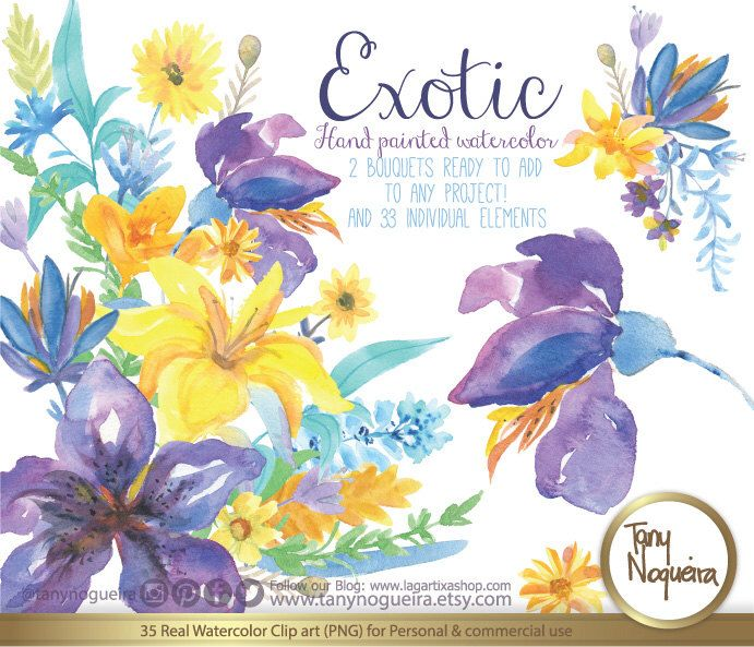 Explore Exotic Flowers Blue And More Purple Yellow Clipart