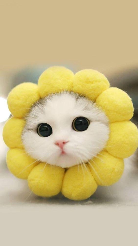Photo of Gatos domésticos também são membros importantes da família – Página 49 de 58 – Animal Blog