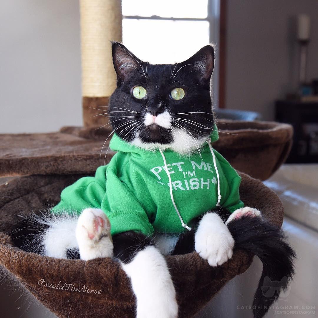 Bu hesap askıya alınmıştır Funny cat