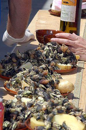 Xvi Festa Do Percebe Do Roncudo De Corme Fiesta Crustaceos Thing 1