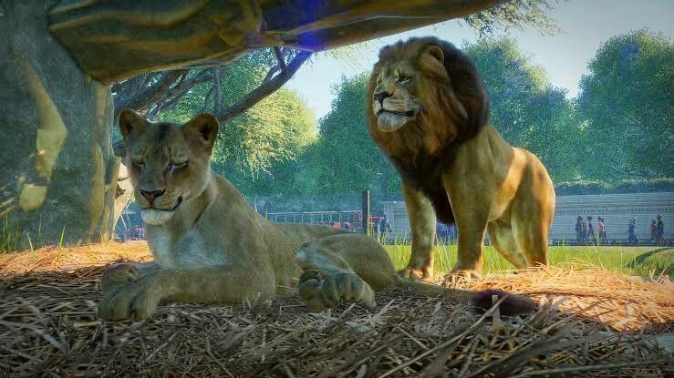 Pin De Gabriel Biel Em Games De Criacao Zoologico Habitat Cuidar De Animais