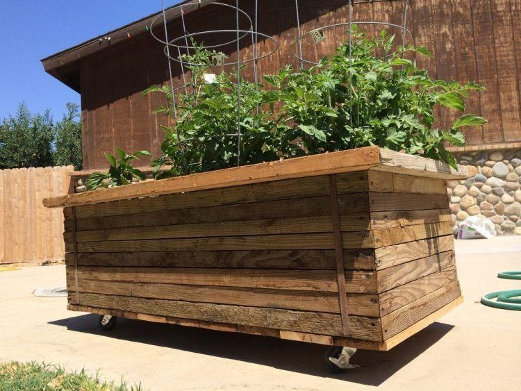 Holzkiste mit Rollen wird zum mobilen Gemüsegarten | Gartenanbau ...
