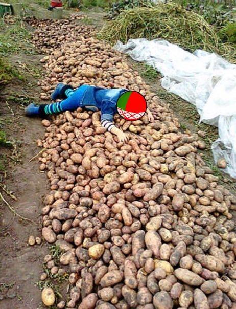 Копать картофель прикольные картинки, февраля