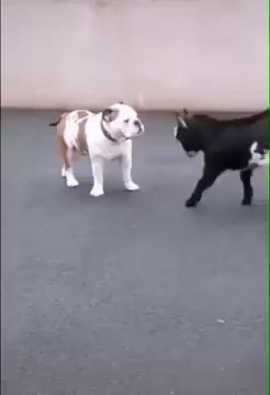 Savage Street Fight!