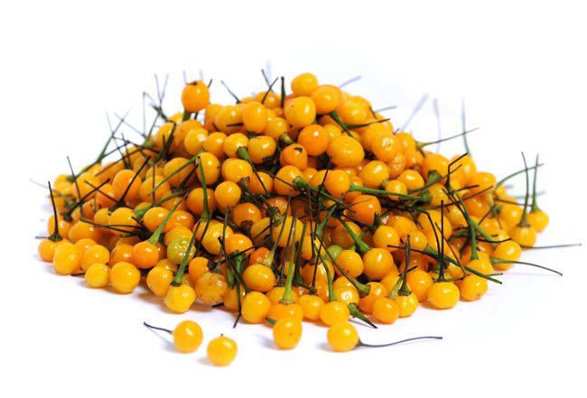 #EcoOla's Charapita Peppers in a gorgeous, golden heap.