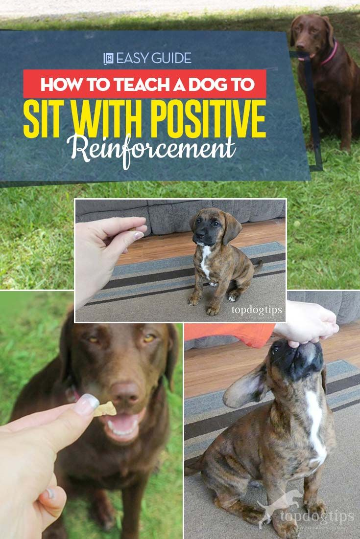 How To Teach A Dog To Sit With Positive Reinforcement Puppy
